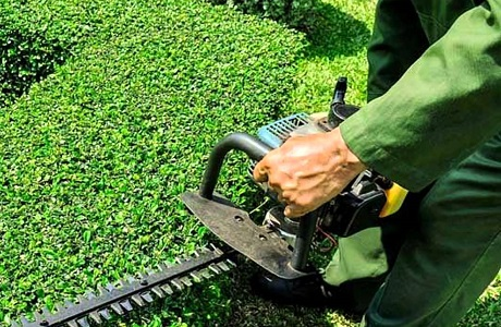 plant health care hedge trimming