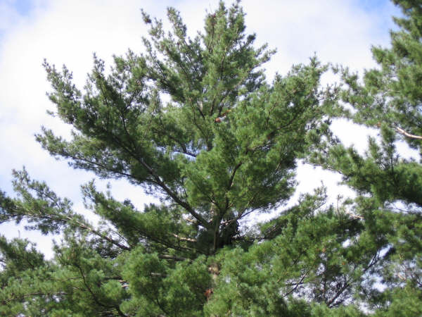 residential-tree-cutting-services-in-halifax-ns-5