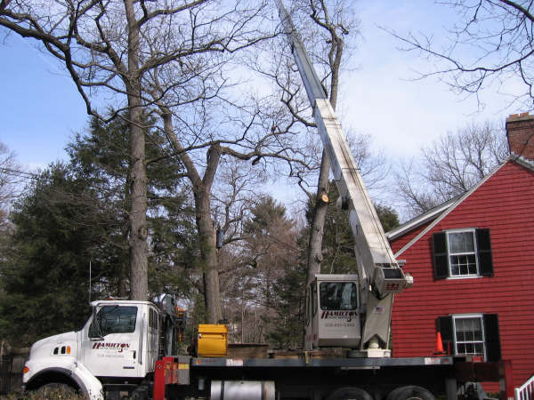 tree-removal-service-dartmouth-ns-1
