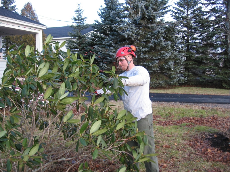 tree-trimming-service-dartmouth-ns-04