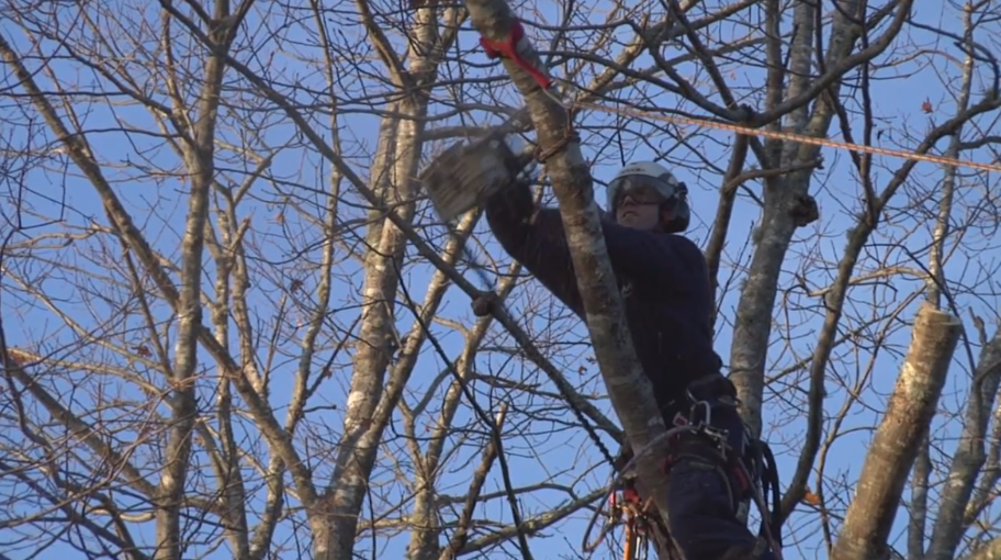 tree-trimming-services-bedford-ns