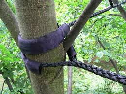 tree support and protection